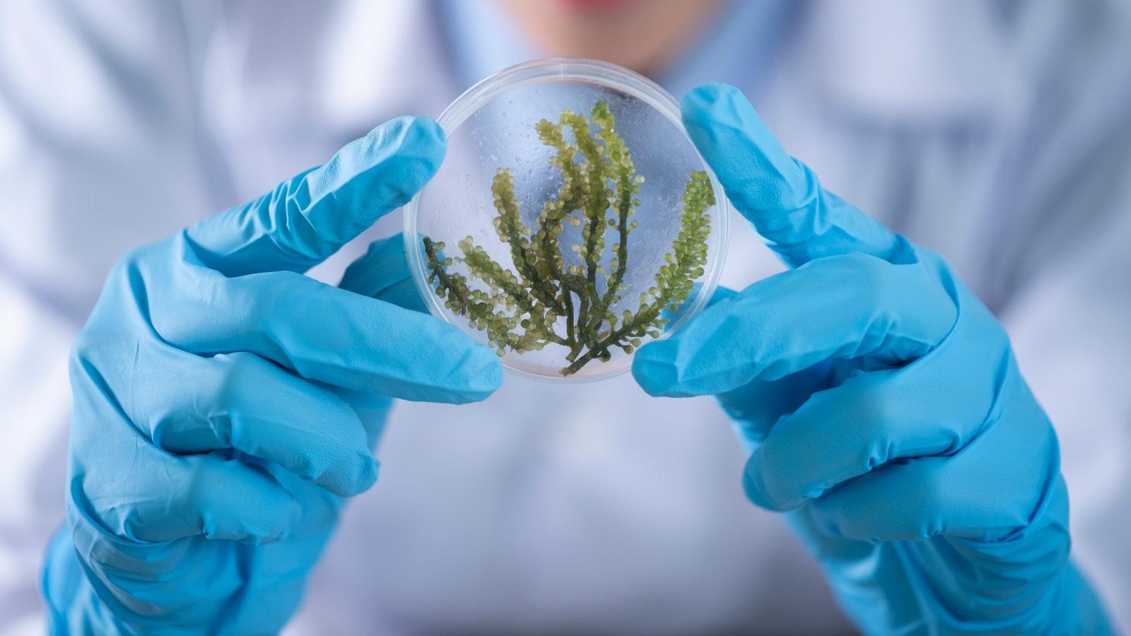 Moleküler Biyoloji ve Genetik Lisans Programı 2019 Başarı Sıralamaları Burada!
